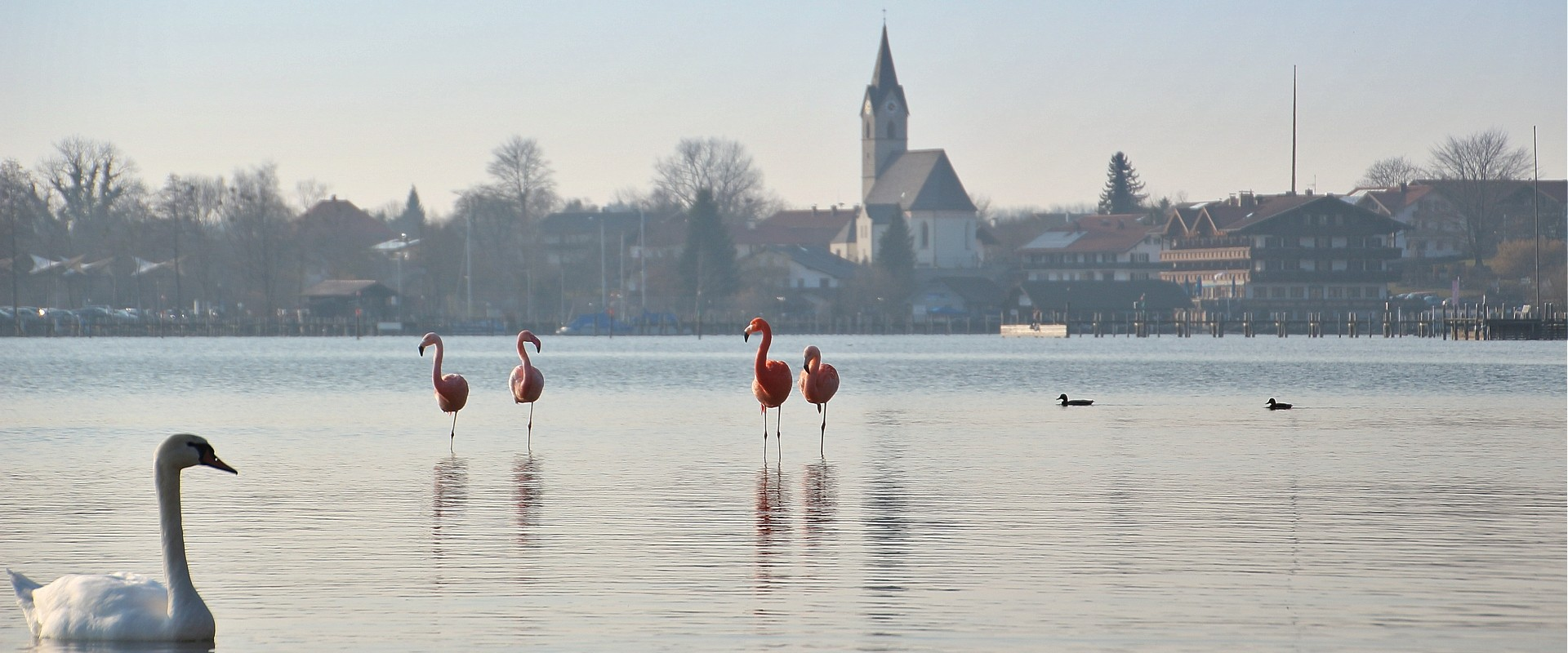Chiemsee-Flamingos vor Seebruck, © Christel Hacker