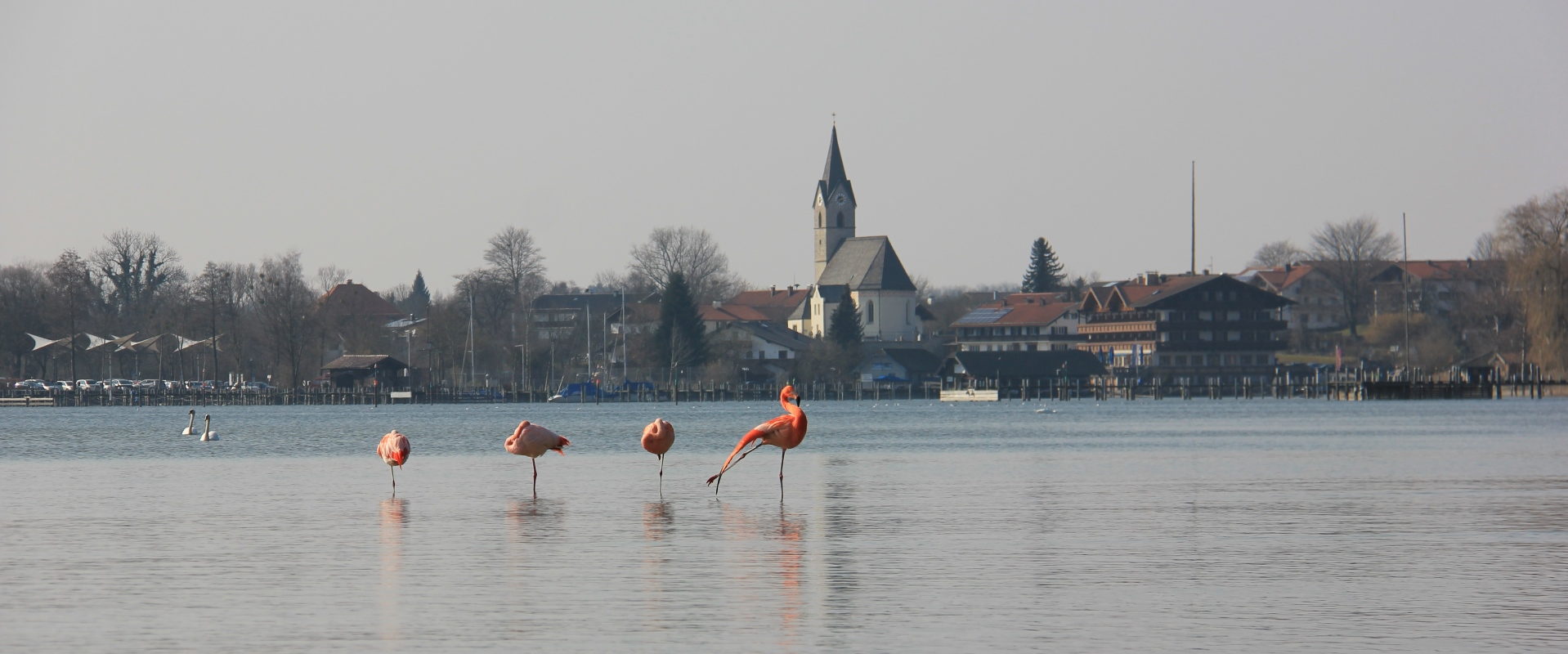 Flamingobesuch in Seebruck, © Tourist-Information Seebruck